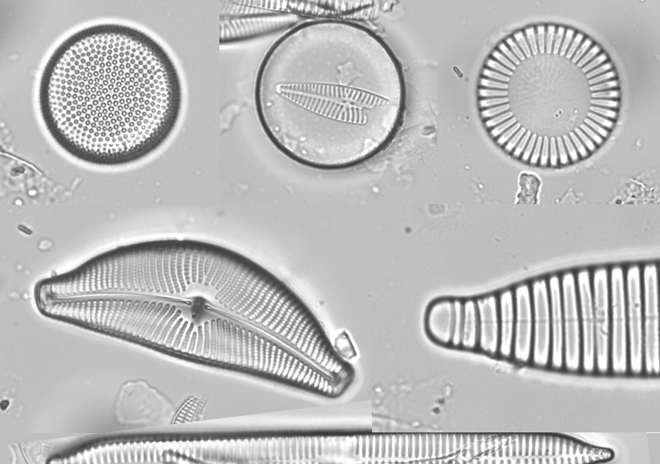 New video – Diatoms that gave shape to all life on earth