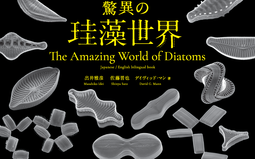 Book review: The Amazing World of Diatoms