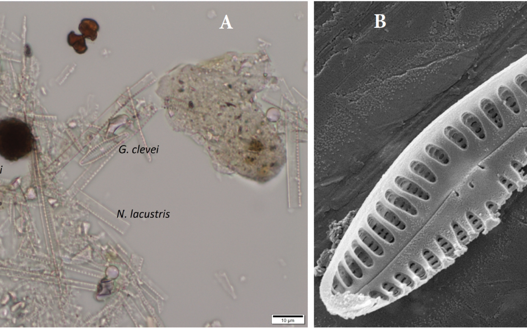 Gomphonema clevei, oxygen and Lake Tanganyika, Africa